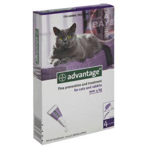 אדוונטג' לחתול מעל 4kg