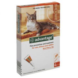 אדוונטג' לחתול עד 4kg