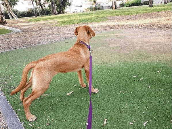 הטיפים הכי חשובים לטיול עם הכלבה שלך