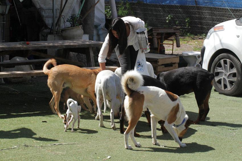 אז איך יודעים כמה אוכל לתת לכלב? – תשובות מקצועיות לשאלות נפוצות