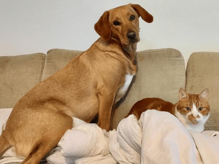 מחפשים שם לכלב או שם לחתול החדש?