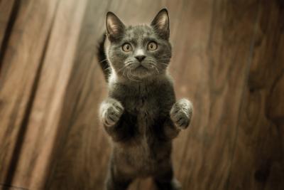 כל מה שרציתם לדעת על קטניפ - הסם החוקי של החתולים