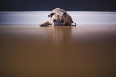 חיות מחמד בזמן חירום - טיפים לטיפול והרגעה