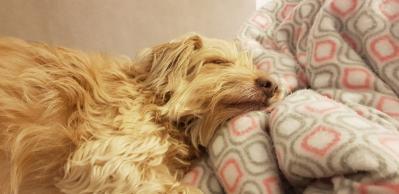 מה הכלבים שלנו מספרים לנו כשהם ישנים?
